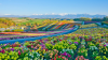 Panoramic Flower Gardens Shikisai hill Japan shutterstock_1009420582 tra24-online-japan