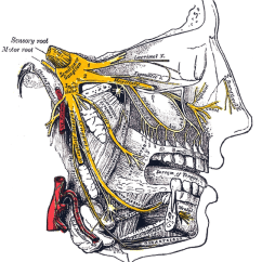 Trigeminal Nerve Diagram Free Tree Powerpoint Neuralgia Vs Tmj What S The Difference Of Facial Nerves Including