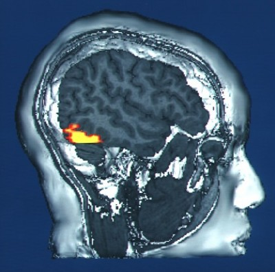 Heat + Energy = Brains.