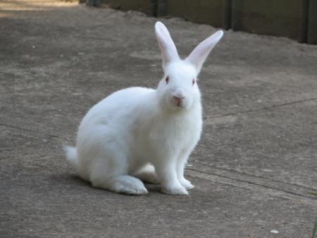 10. Rabbit