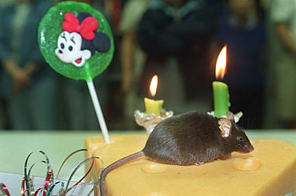 3. Cumulina the Mouse