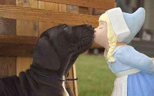 kissing-dog