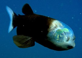a-fish-transparent-head