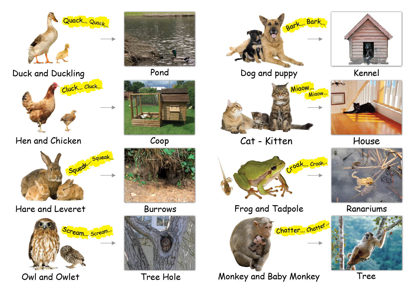 Buy Animal Homes Books Online Animal Homes Book