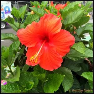 flower-nyc