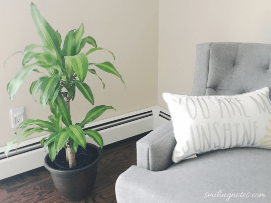 house plants help to liven up a space