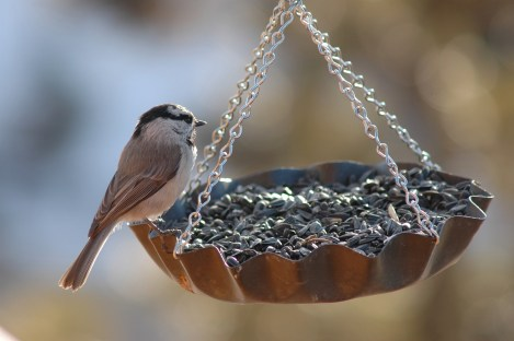 summer activities - make a bird feeder