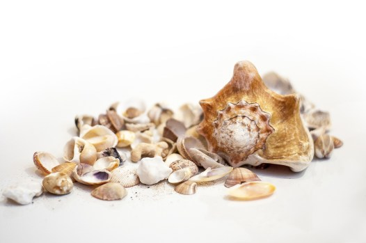 collect sea shells on the beach
