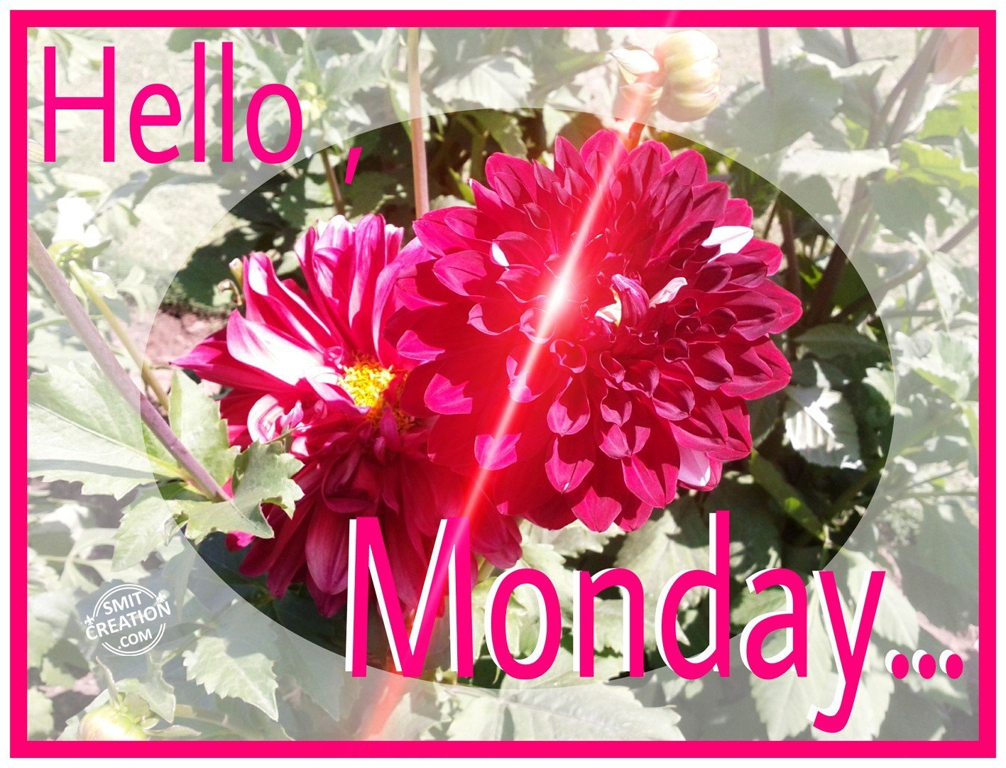 Hello MONDAY SmitCreation Com