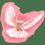 Aphrodite_MyLovelyLadyBirds-300x300