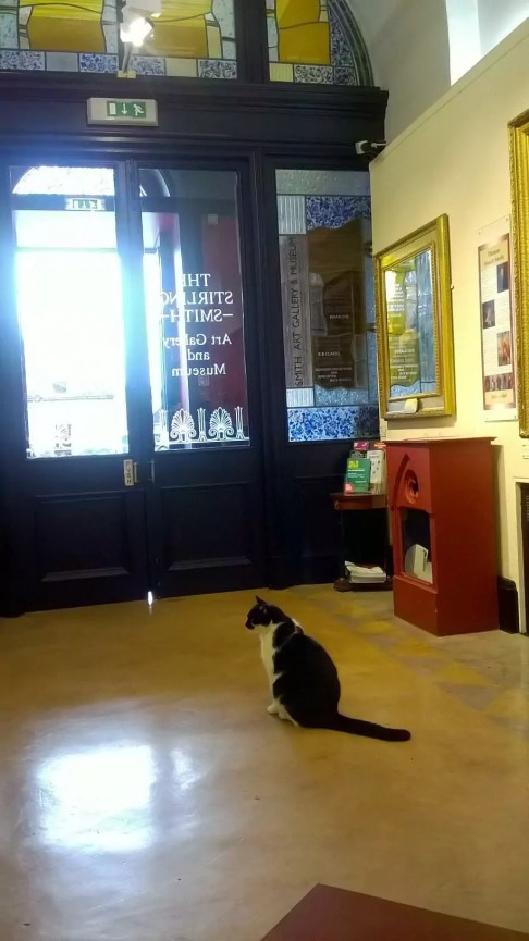 Oswald the museum cat welcomes you to the Stirling Smith