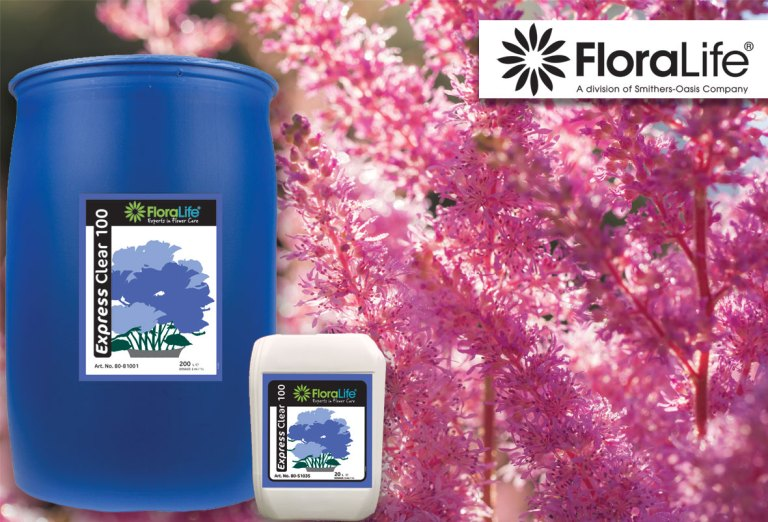 Smithers-Oasis' Floralife® Express Clear 100  is Verified by FloraHolland for Astilbe