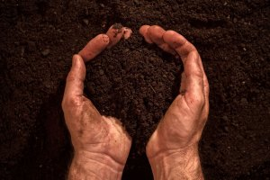 Two hands in fertile soil