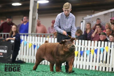 Boy showing his pig at the fair