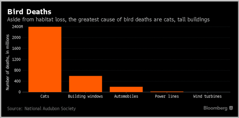 bird_deaths