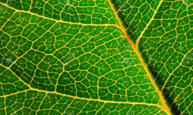 Smokable Herbs Guide to Kratom