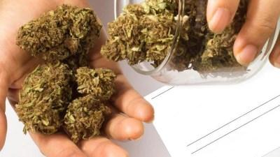Congresso Peru aprova maconha medicinal  Congresso Peruano aprova uso terapêutico da maconha