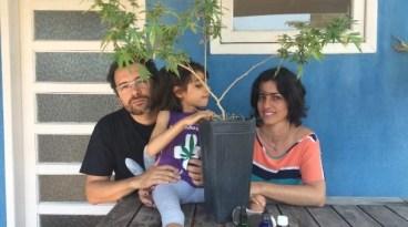 Maconha familias rede clandestina 02 Famílias criam redes clandestinas de distribuição de óleo de maconha