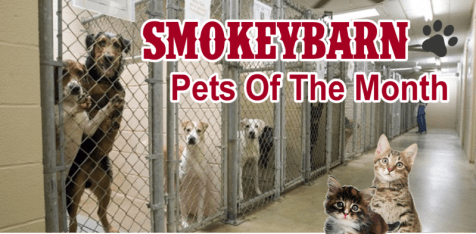 pets of month slider b