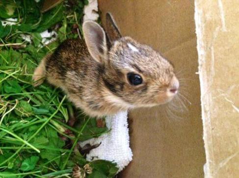 waldens puddle rabbit