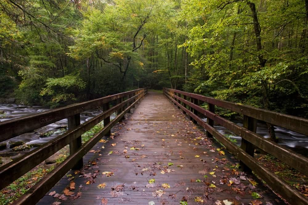 12 Gorgeous Smoky Mountain Hiking Trails That Will Blow