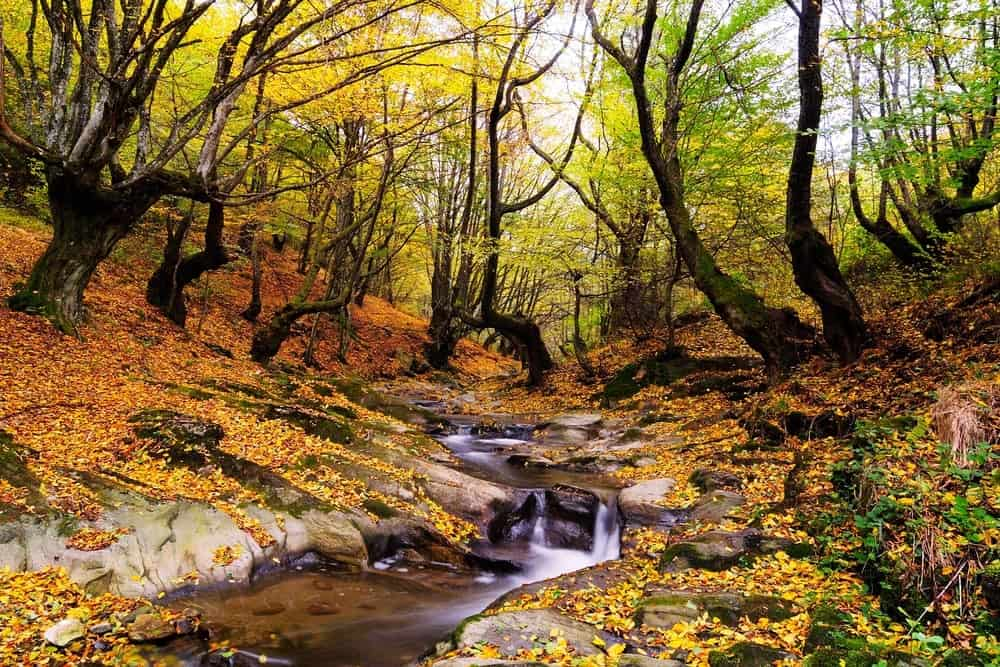 Top 5 Places To Take Pictures of Smoky Mountains Fall Colors