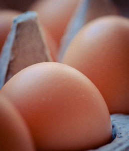 Eggs (detail), photo © 2012 Douglas M. Ford. All rights reserved.
