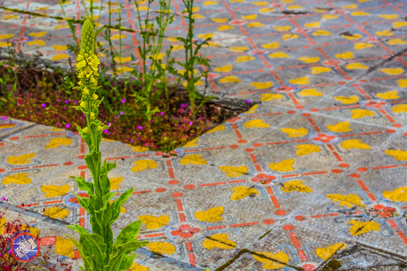 Tile Work from the Former Winter Garden at Lowther Castle (©simon@myeclecticimages.com)