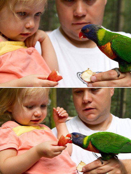 Lucy feeding the Lories