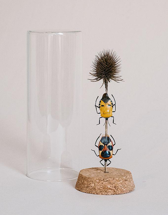 Catacanthus Nigripes en Catachantus Incarnatus in glazen buis