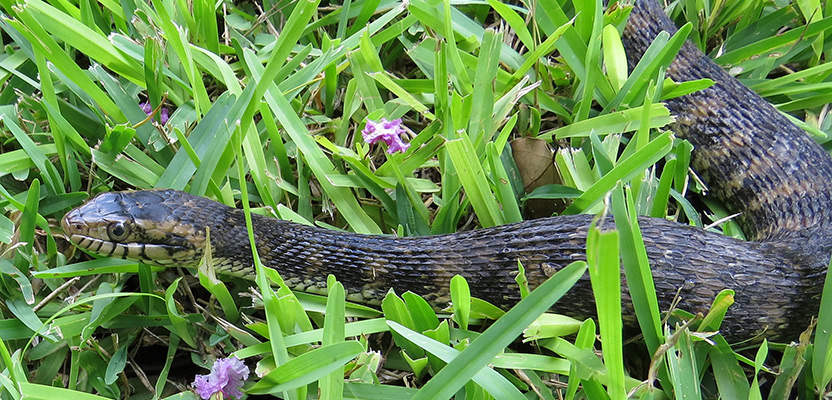 How to Keep Snakes Out of Your House or Yard