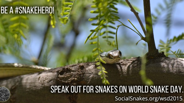 World Snake Day 2015