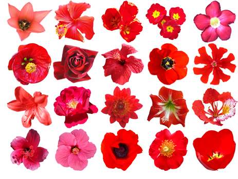 Free HQ PSD Red Flowers Vector Pack