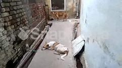 Alley, Alleyway, Animal, Brick, Building, Canine, Concrete, Corridor, Ditch, Dog, Gravel, Housing, Nature, Neighborhood, Outdoors, Path, Pavement, Pet, Stone, Sun Light, Window