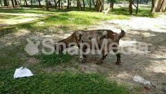 Animal, Antelope, Bird, Boar, Bull, Cattle, Countryside, Cow, Deer, Farm, Field, Forest, Goat, Grass, Grassland, Grazing, Ground, Grove, Hog, Human, Jungle, Land, Lawn, Mammal, Meadow, Mountain Goat, Nature, Outdoors, Park, Pasture, Path, Person, Pig, Plant, Ranch, Rock, Rural, Sheep, Soil, Tent, Tree