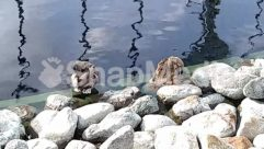 Angler, Animal, Apparel, Beak, Bird, Canine, Clothing, Cormorant, Dock, Dog, Duck, Eagle, Female, Fishing, Human, Lagoon, Lake, Land, Leisure Activities, Mallard, Mammal, Nature, Ocean, Otter, Outdoors, Person, Pet, Photo, Photography, Pier, Plant, Port, Ripple, River, Rock, Rubble, Sea, Sea Life, Seagull, Shoreline, Slate, Soil
