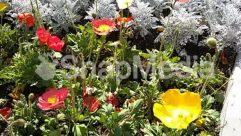 Anemone, Anther, Asteraceae, Bazaar, Blossom, Carnation, Dahlia, Flower, Garden, Geranium, Ice, Jar, Market, Nature, Outdoors, Peony, Petal