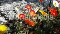 Anemone, Art, Aster, Asteraceae, Bazaar, Blossom, Carnation, Dahlia, Daisies, Daisy, Flower, Garden, Geranium, Market, Outdoors, Peony, Petal, Plant