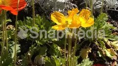 Pollen,Plant,Petal,Hibiscus,Flower,Dahlia,Daffodil,Bush,Bud,Blossom,Asteraceae,Arenaria,Anther,Anemone