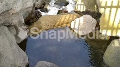 Adventure, Creek, Ditch, Leisure Activities, Nature, Outdoors, Path, Pond, Puddle, River, Rock, Stream, Walkway, Water, Wilderness