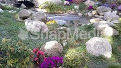 Animal, Backyard, Blossom, Bush, Coral Reef, Creek, Flower, Forest, Garden, Ice, Land, Landscape, Moss, Nature, Ocean, Outdoors, Petal, Plant, Pond, Rainforest, Reef, River, Rock