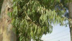 Plant, Tree, Leaf, Willow, Jar, Potted Plant, Pottery, Vase, Vegetation, Bush, Blossom, Flower, Conifer, Annonaceae, Planter