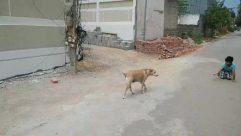 Person, Human, Animal, Dog, Mammal, Pet, Canine, Path, Bulldog, Urban, Road, Nature, Town, Street, City