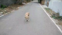 Person, Human, Path, Mammal, Pet, Animal, Canine, Dog, Road, Walkway, Vegetation, Plant, Strap, Urban, Building