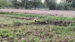 Ground, Vegetation, Plant, Soil, Nature, Outdoors, Animal, Bird, Yard, Grass, Land, Tree, Woodland, Forest, Mammal