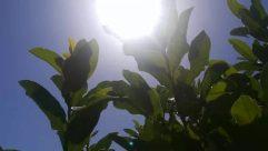 Sunlight, Plant, Leaf, Vegetation, Flare, Light, Nature, Outdoors, Land, Tree, Rainforest, Jungle, Sun, Sky, Green