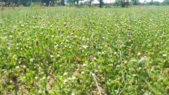 Bush, Vegetation, Plant, Field, Nature, Outdoors, Flower, Blossom, Dahlia, Countryside, Grassland, Animal, Asteraceae, Grass, Rural