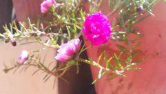 Plant, Blossom, Geranium, Flower, Rose, Petal, Flower Arrangement, Pollen, Flower Bouquet, Tree, Carnation, Iris, Animal, Invertebrate, Wasp