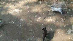 Animal, Bird, Walkway, Path, Nature, Water, Outdoors, Mammal, Ground, Flagstone, Rock, Land, Wildlife, Dog, Canine