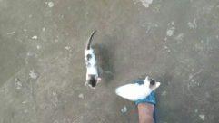 Apparel, Clothing, Footwear, Person, Animal, Mammal, Pet, Canine, Dog, Sandal, Bird, Toe, Shoe, Cat, Strap